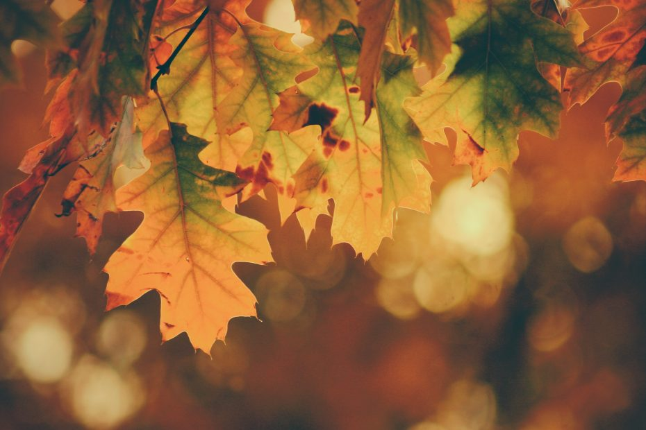 Autumn clock change